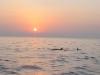 foto Dolfijnen