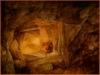 Leeuw in grot