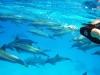 Zwemmen met de pod dolfijnen! In de Rode Zee