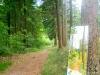 Schilderen in het bos