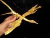gouden-vogel-takje